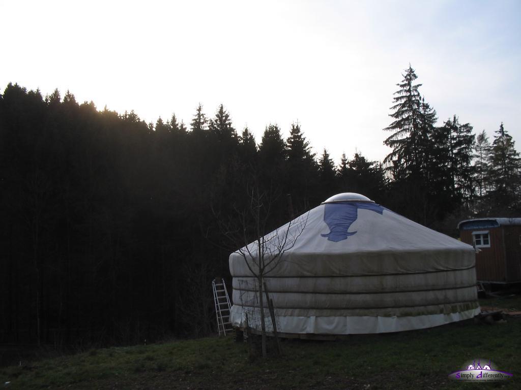 Юрта Криса Аппли рядом с лесом